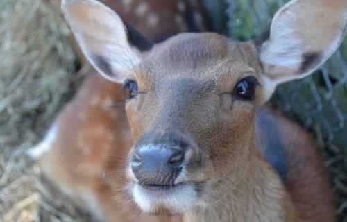 Visiting the Lagoon Deer Park in Sandusky, Ohio