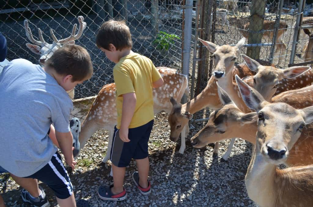 Visiting the Lagoon Deer Park in Sandusky, Ohio