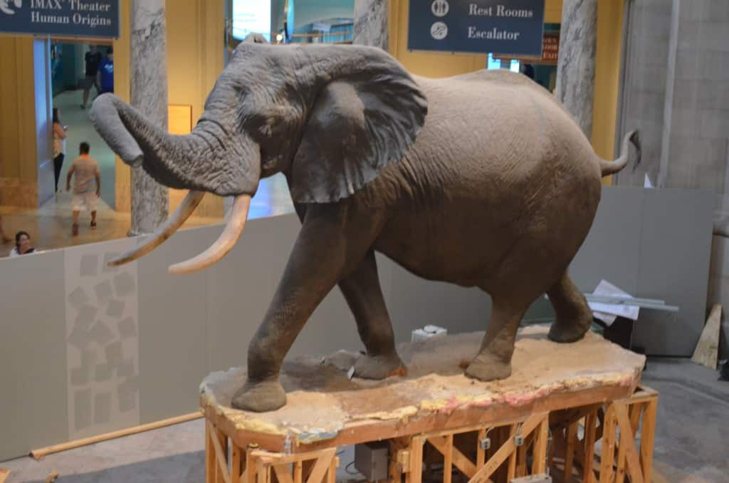 Smithsonian Natural History Museum - Bucket List Marked Off Washington DC