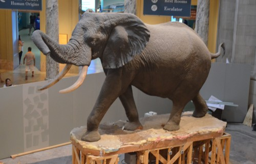Smithsonian Natural History Museum – Bucket List Marked Off