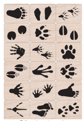 Animal Tracks Nature Stamps
