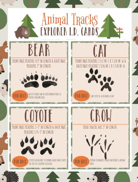 Animal Tracks Explorer ID Cards
