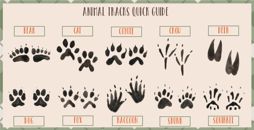 Revered image in free printable animal tracks