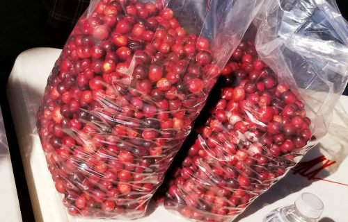 The Cranberry Festival I Wasn't Expecting: Tips for Visiting