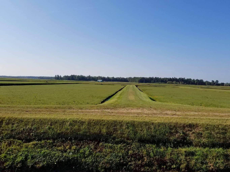 Cranberry fields in wisconsin