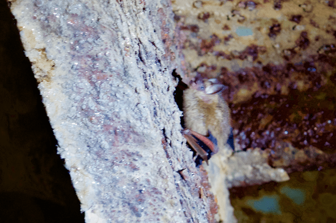 small bat inside of cave
