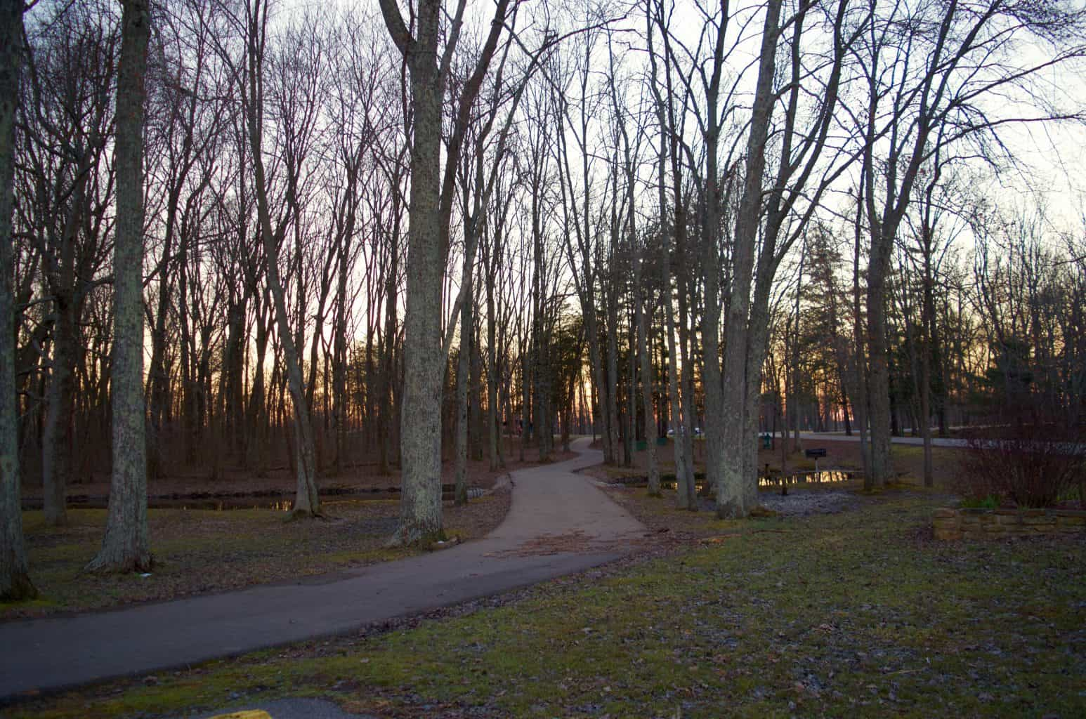 nature trail in woods at buffalo trace park