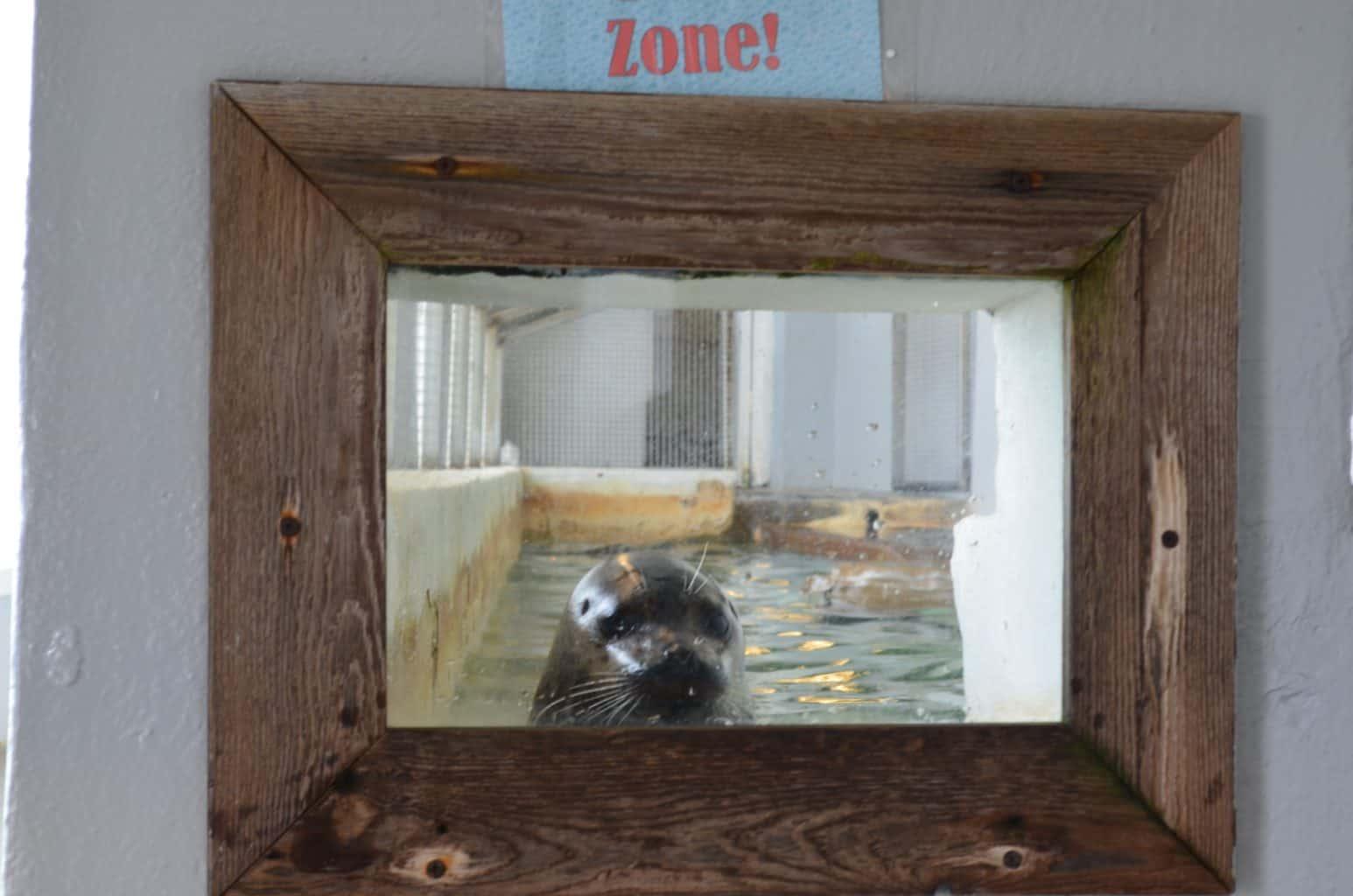 Seaside Aquarium sea lion Oregon coast