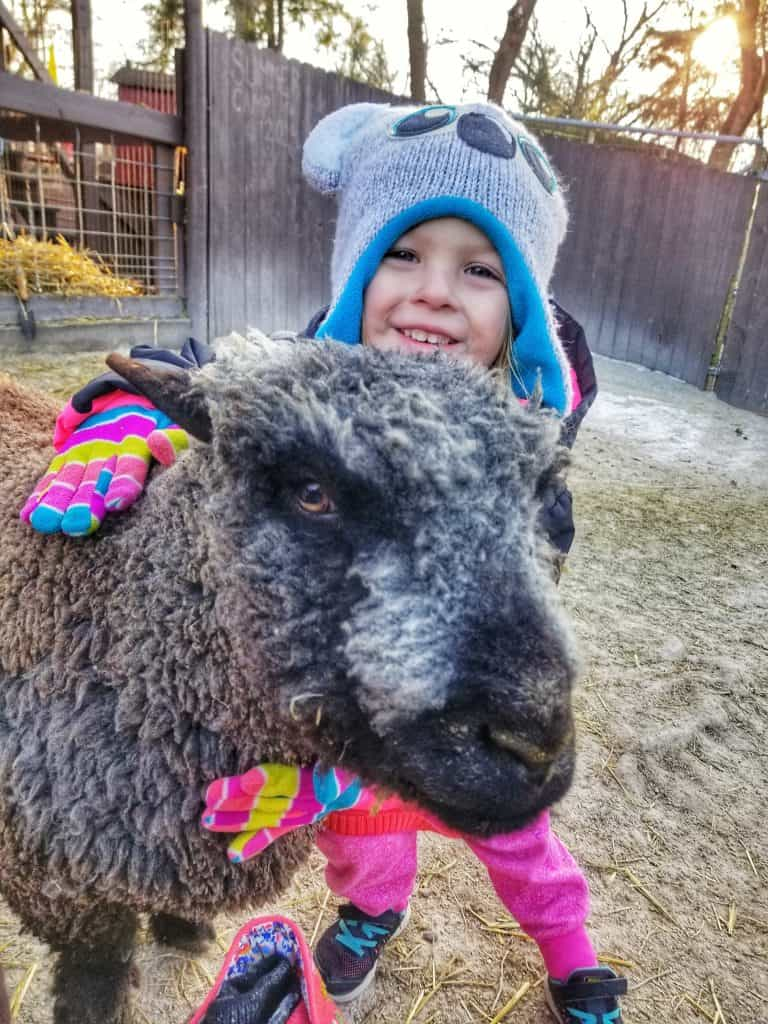 little girl hugging sheep