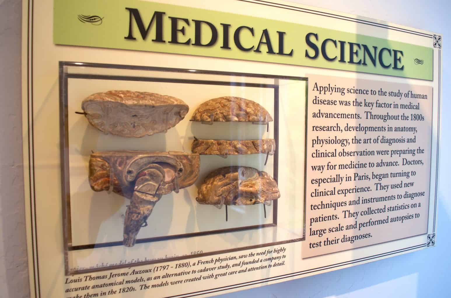 paper mache brain by medical science doctor