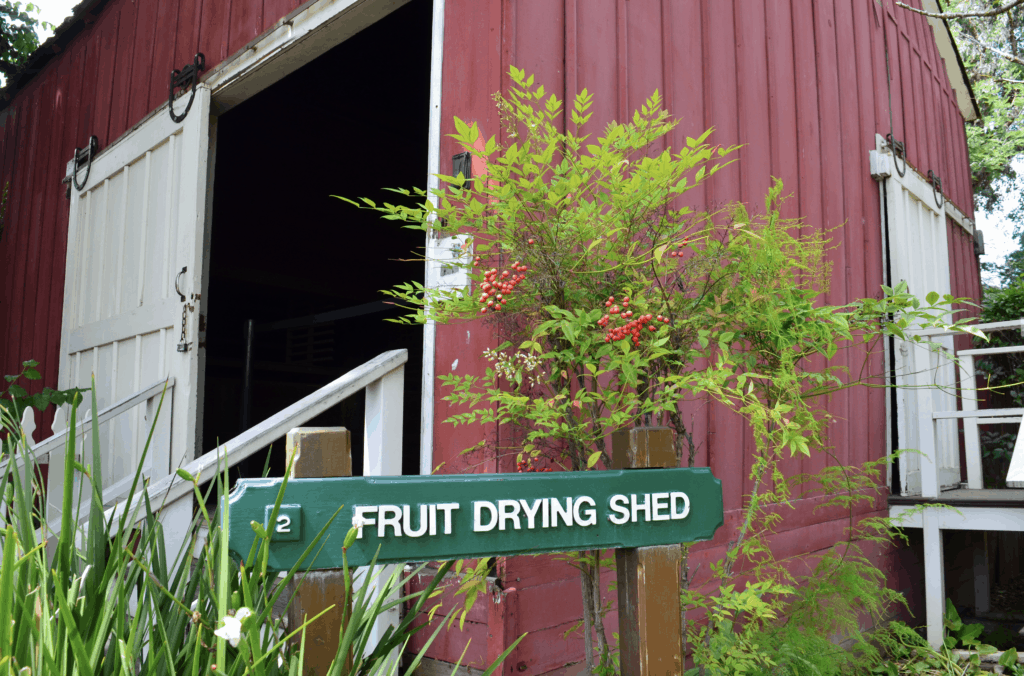 fruit drying shed red barn