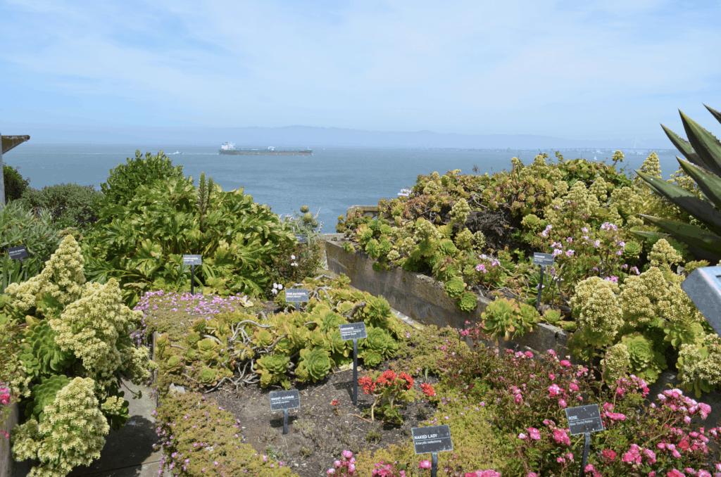 exotic garden at Alcatraz