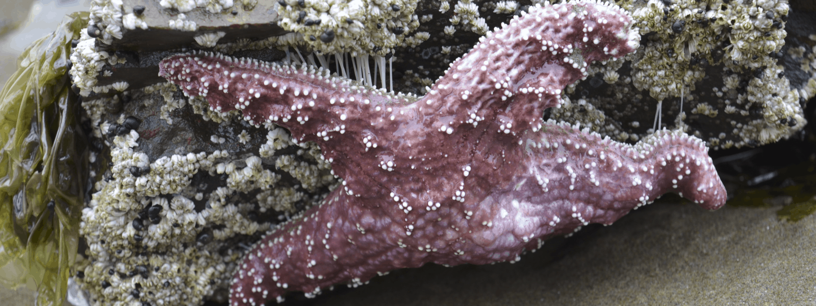 Animals in the Tidal Pools and on the Oregon Coast