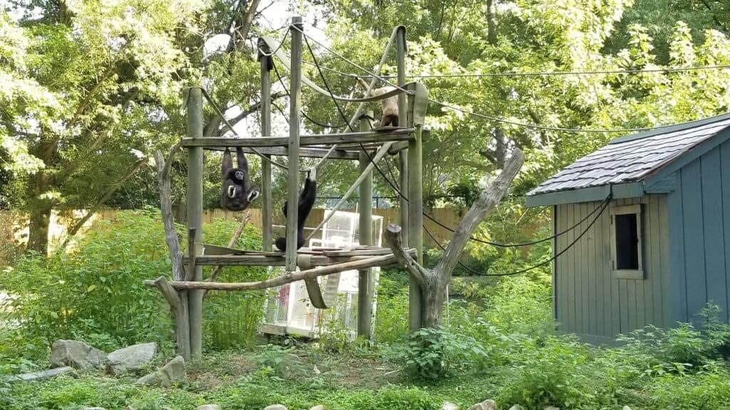 monkey island African Wildlife Safari park