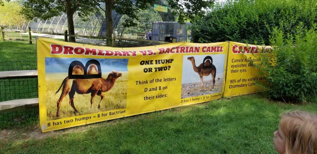 camel ride banner African Wildlife