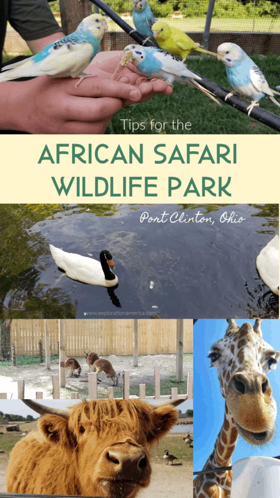 animals at African Wildlife Safari Park