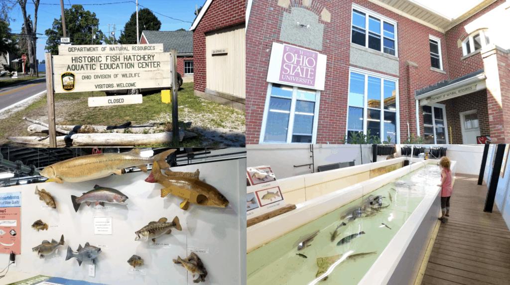 stone lab aquatic center ohio
