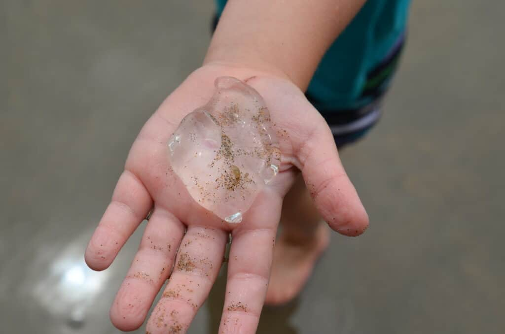 comb jelly on kid's hand on beach