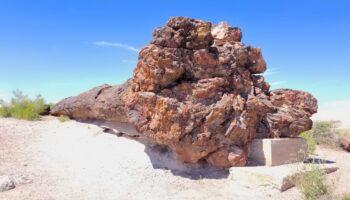 petrified wood in national park arizona