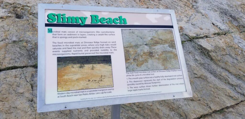 slimy beach science fossils Denver