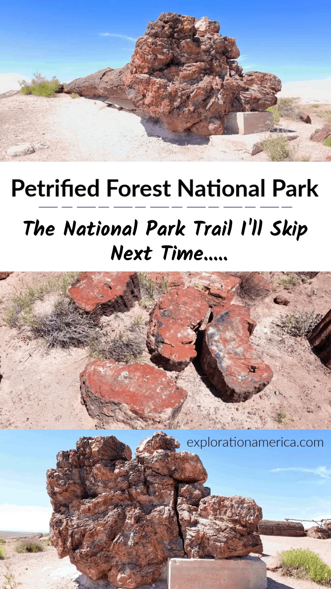 petrified forest national park rainbow tree