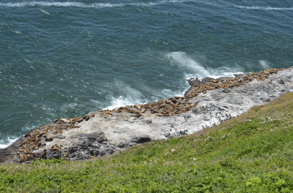 sea lions on rocks Oregon coast