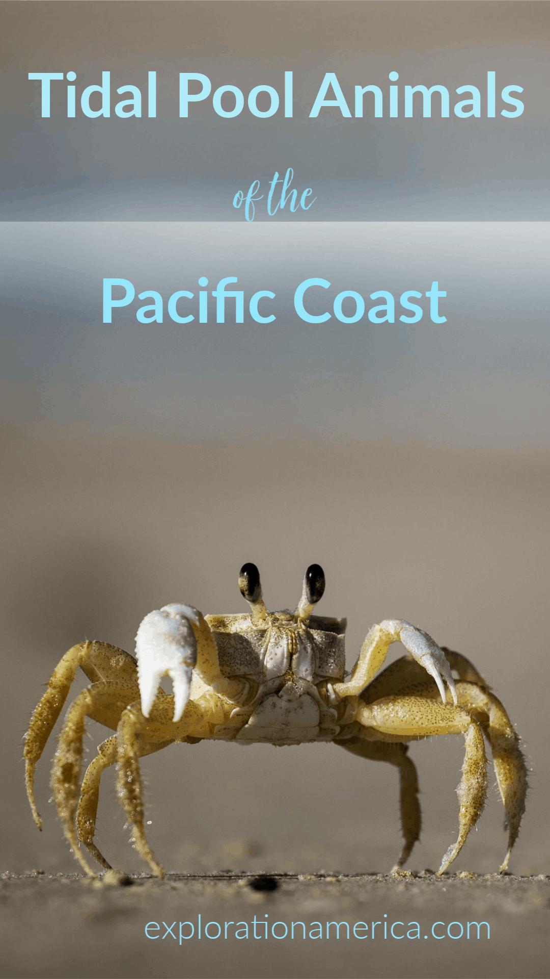 Oregon Coast Tidal Pool Animals