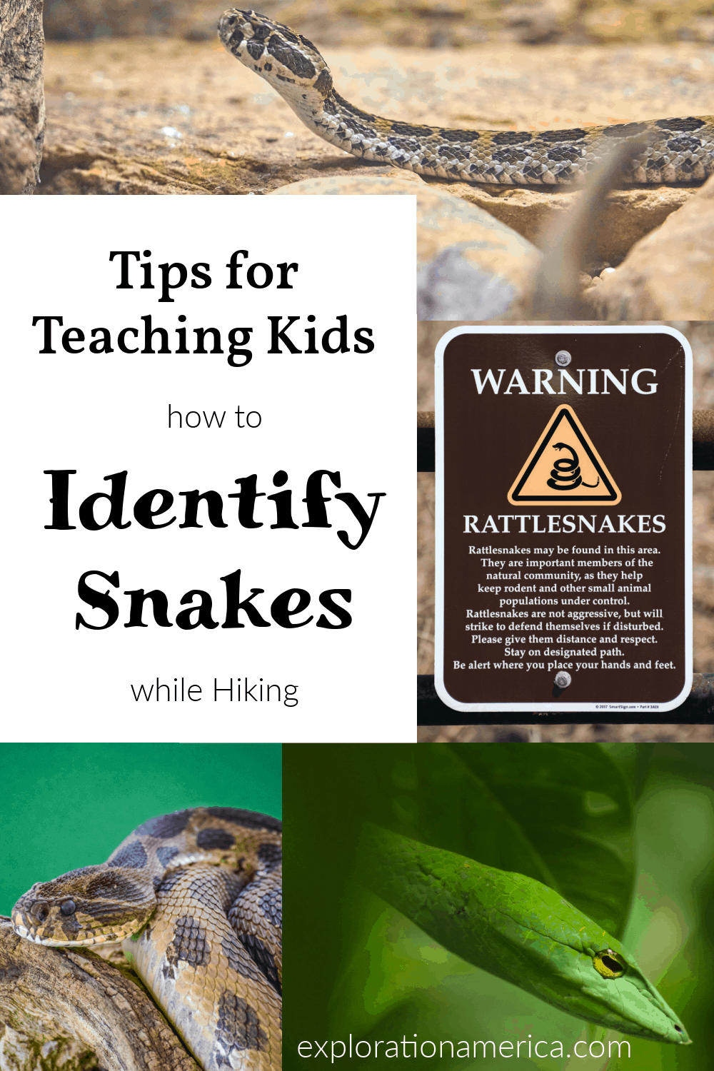 Tips for Teaching Kids to Identify Snakes when Hiking