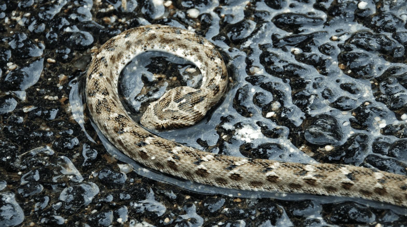 snake stock