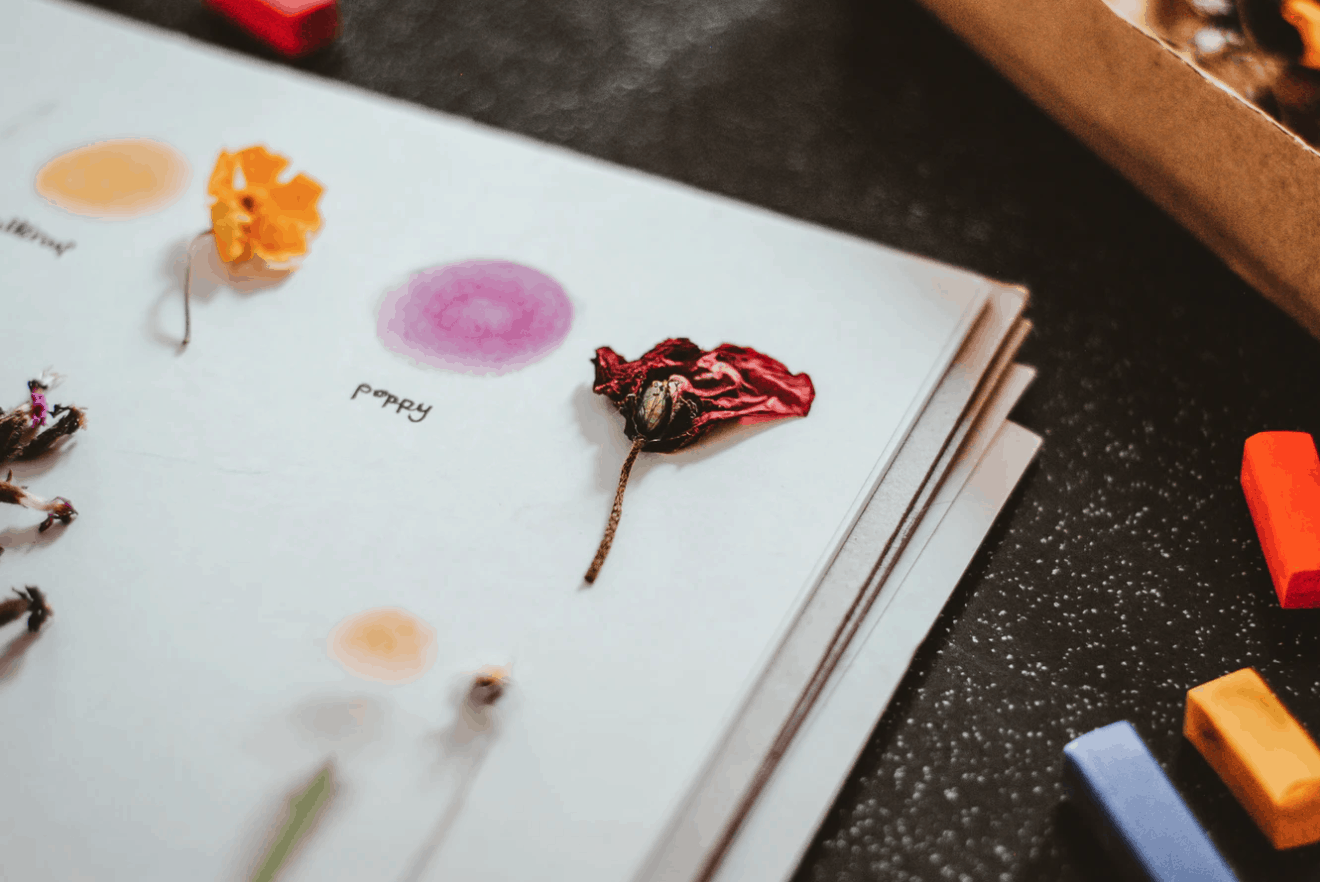 pressed flowers in journal stock