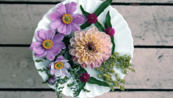 plate of flowers for pressing stock