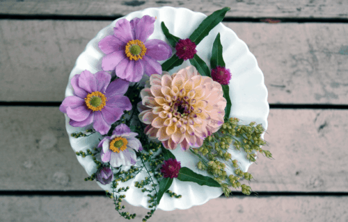 How to Press Flowers for Your Nature Journal Field Guide