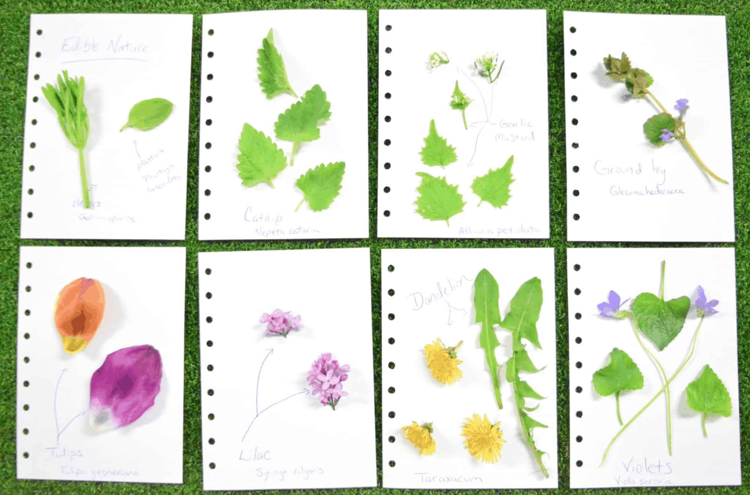 layout of pressing flowers field journal