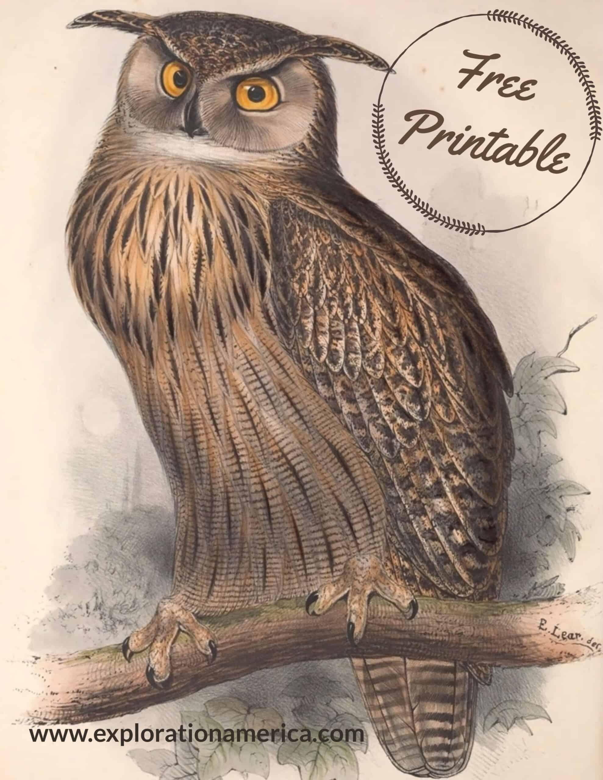 Free Horned Owl poster art print