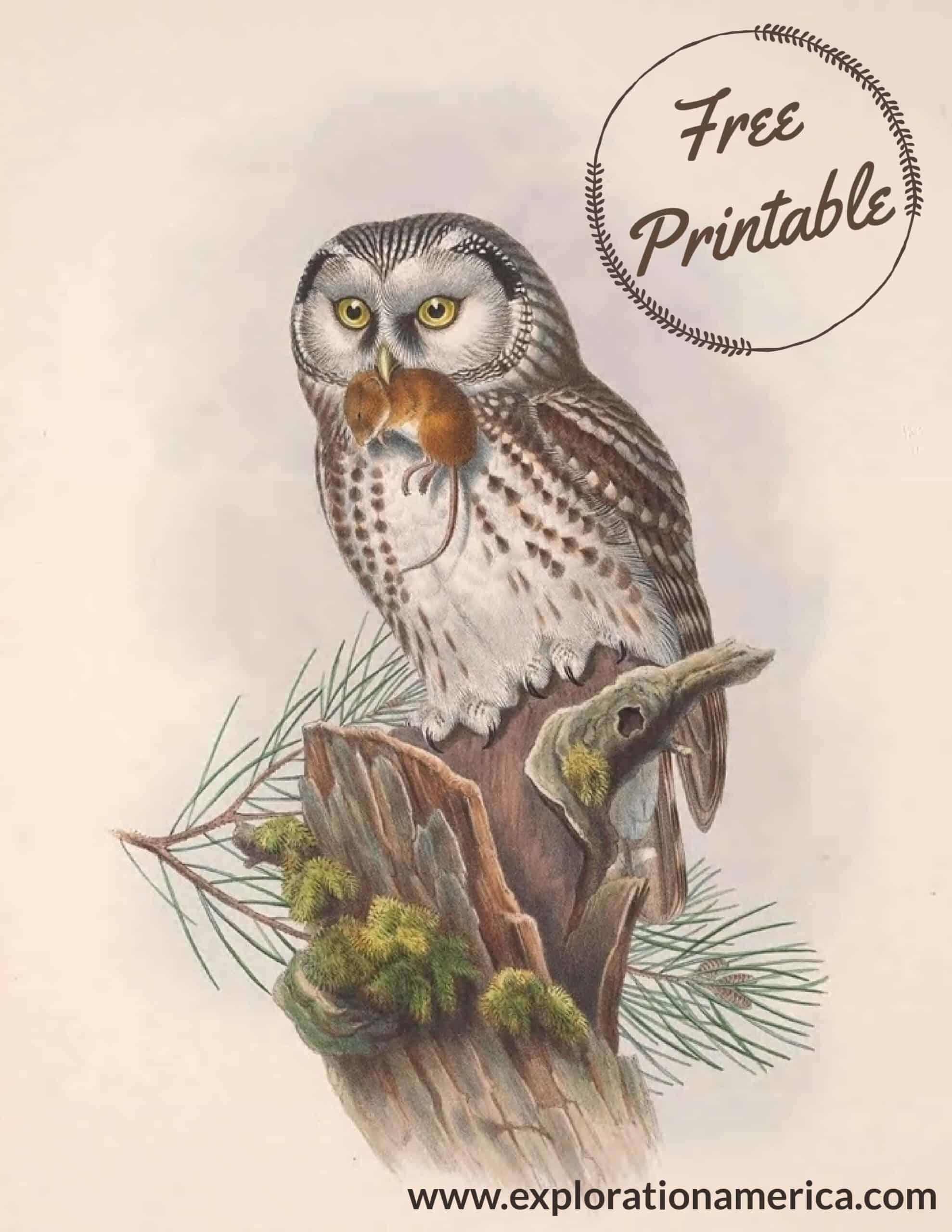 Free owl hunting poster art print