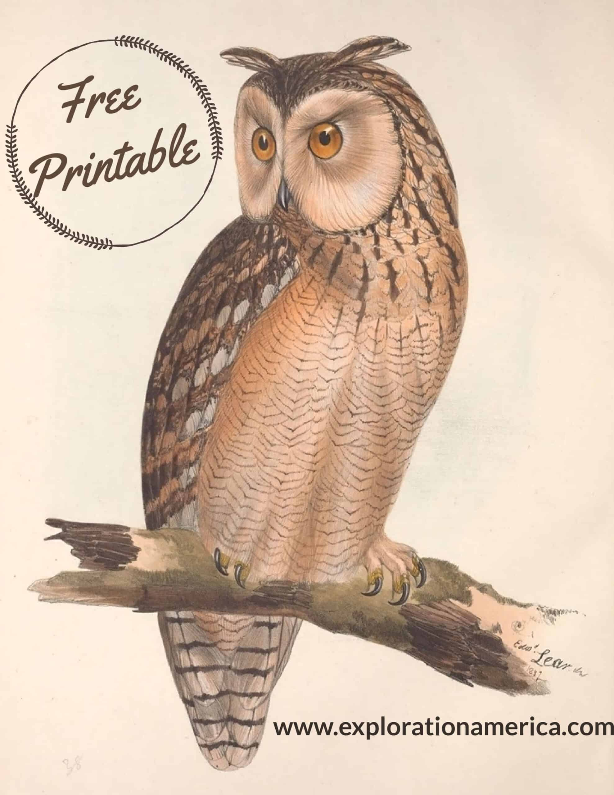Free Long Eared Owl Poster print art