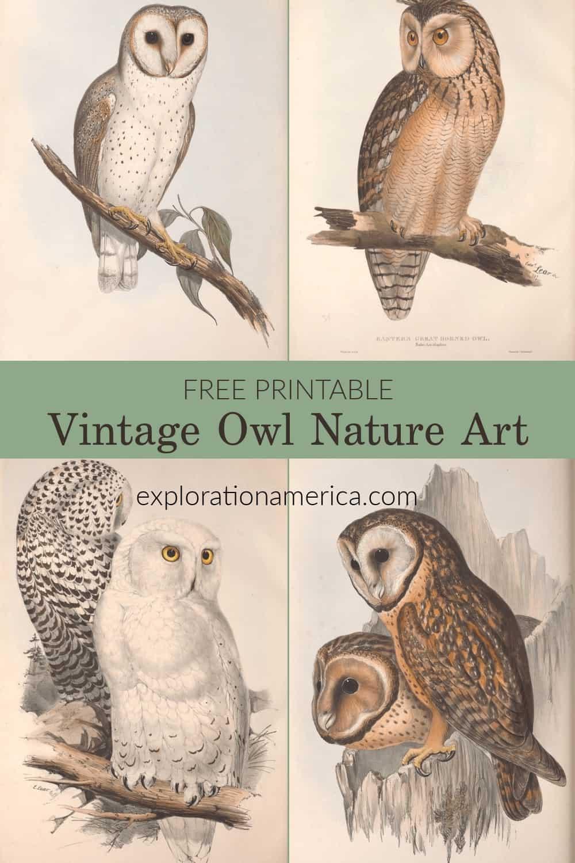 four vintage owl art poster prints
