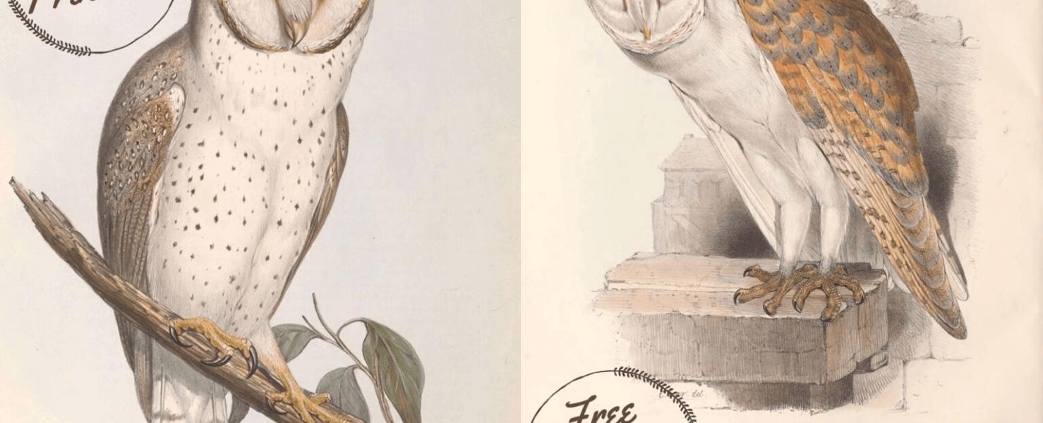 FREE Printable Owl Art Posters – Beautiful Vintage Nature Scenes