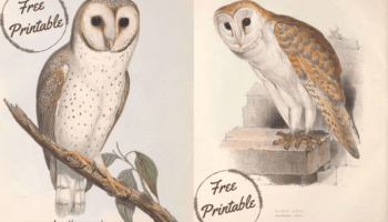 two vintage snowy owl posters