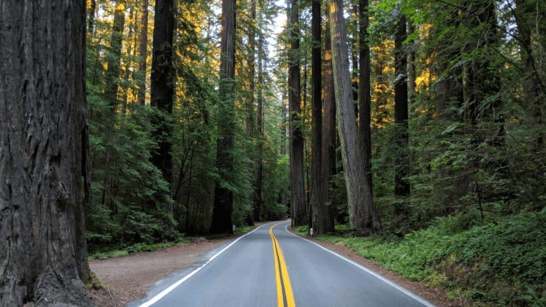 Tips for Exploring Humboldt Redwoods State Park
