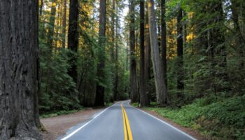 driving through the redwood forest