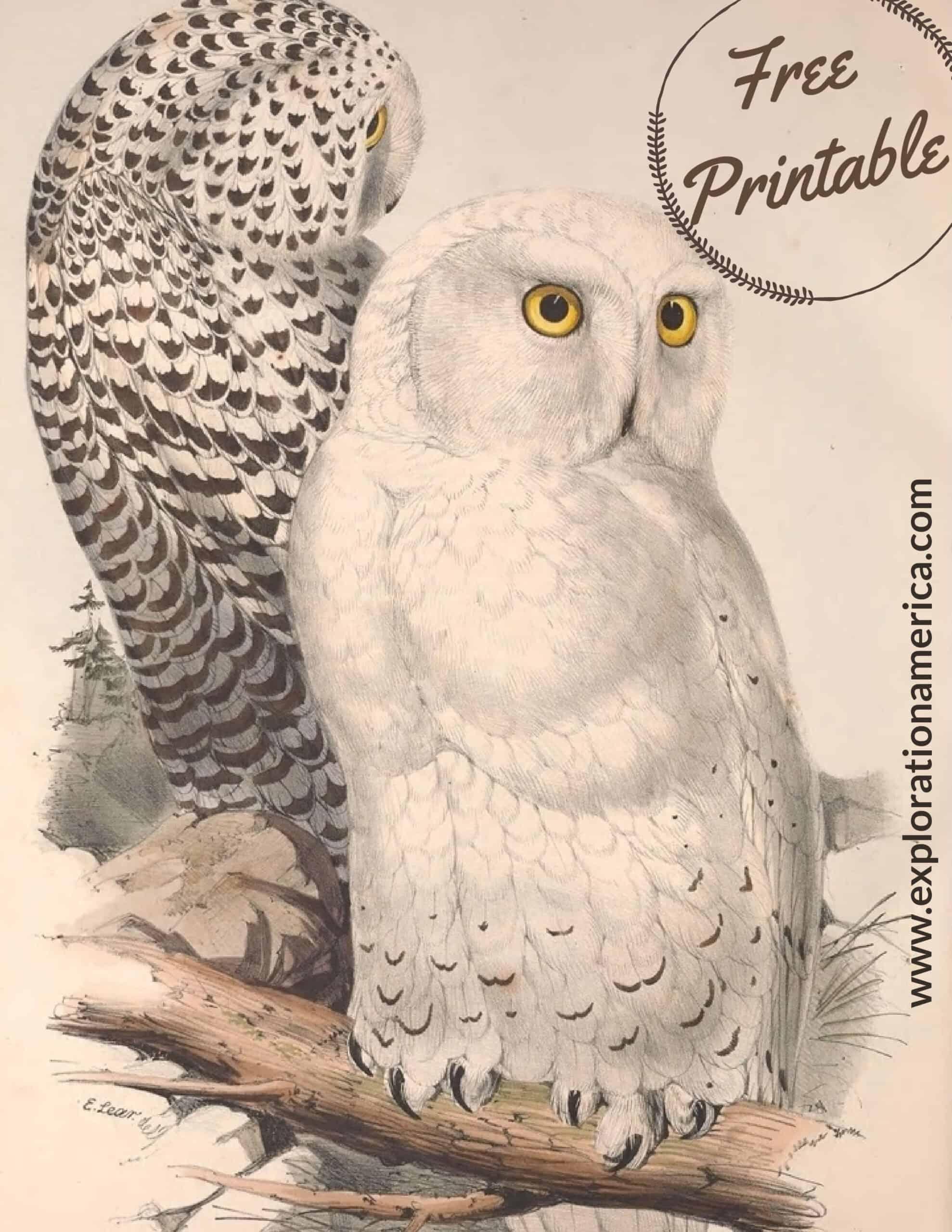 Free Snowy Owl Printable Art Poster
