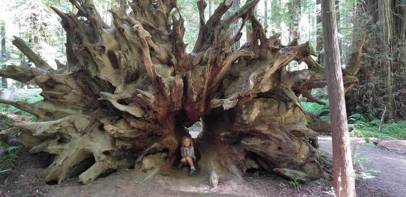 girl standing in redwood tree