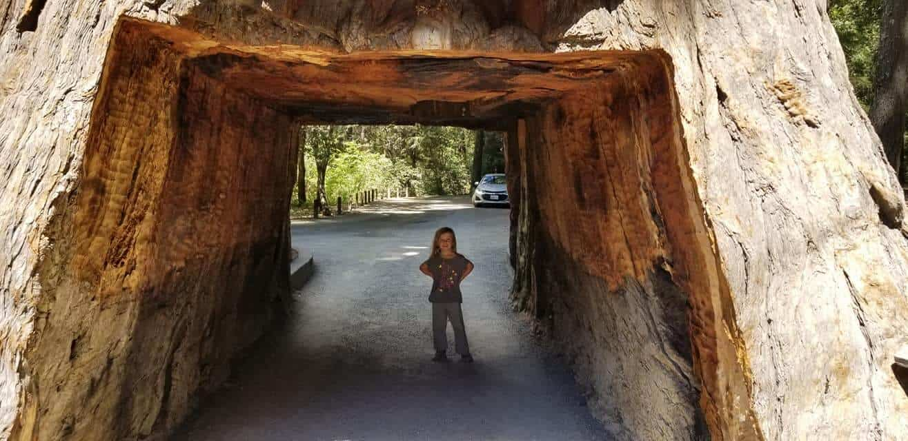 girl standing in Chandelier drive thru tree