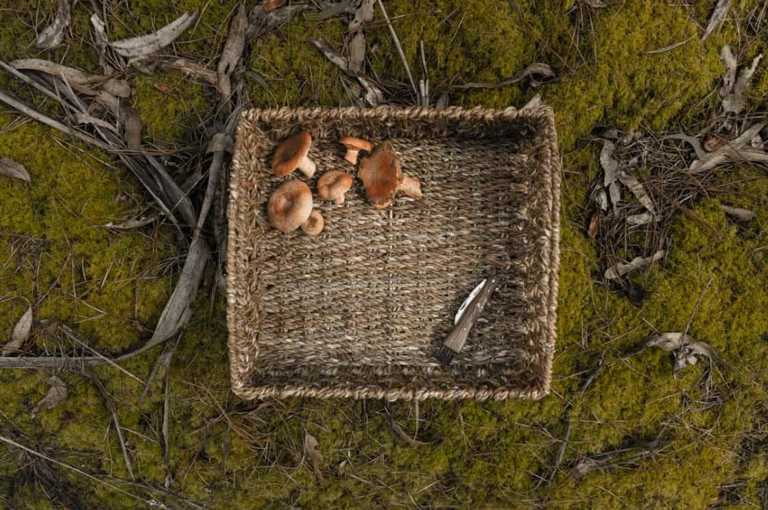 wicker basket of foraged mushrooms